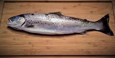 ?痛风病人少吃鱼