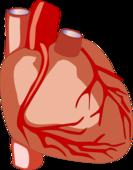 心臟粘液瘤嚴重么 心臟粘液瘤怎么得的