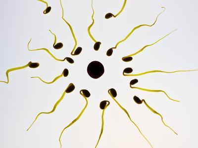 ?精子存活率低真的可以治好吗?