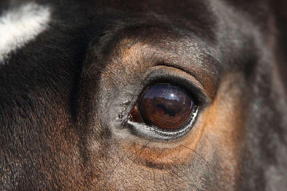 怎么形成眼袋快速去眼袋的土方法