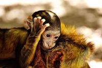 克隆猴在中国诞生 克隆技术对人类将康有哪些影响