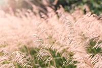 植物激素乙烯的作用 乙烯存在于哪里