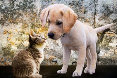 小孩被猫抓伤出血怎么办 被猫抓伤需要打狂犬疫苗吗